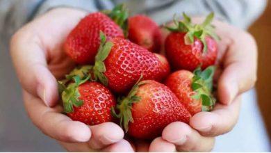 Photo of الفراولة: حقائق غذائية وفوائد صحية