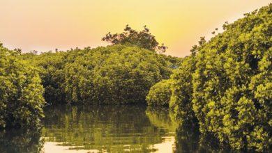 Photo of ThePlace: غابة القندل الواقعة في جزر فرسان بالمملكة العربية السعودية