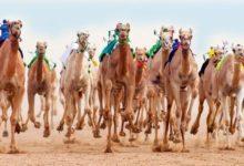 Photo of أكبر مهرجان للإبل في العالم يساعد في جعل المدينة السعودية الوجهة السياحية الأولى