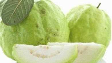 تعرف على أهم الفوائد الصحية للجوافة