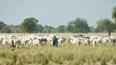 Photo of المملكة العربية السعودية تحظر استيراد الماشية من السودان وجيبوتي بسبب مخاوف من حمى الوادي المتصدع
