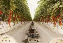 Photo of شركة الأعمال الزراعية بيور هارفست الإماراتية تحصل على التزام 100 مليون دولار من الوفرة الكويتية