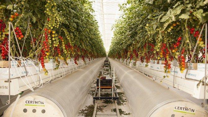 شركة الأعمال الزراعية بيور هارفست الإماراتية تحصل على التزام 100 مليون دولار من الوفرة الكويتية